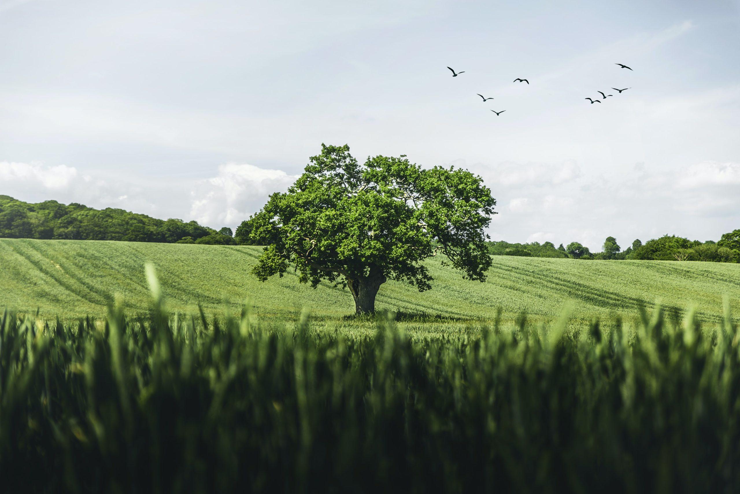 aandrews_tree-scaled.jpg